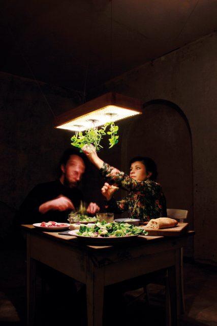 projekt-02-plantsandlights-07